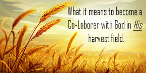 WHAT IF YOU GO INTO THE HARVEST FIELDS AFTER THE HARVEST HAS ENDED?